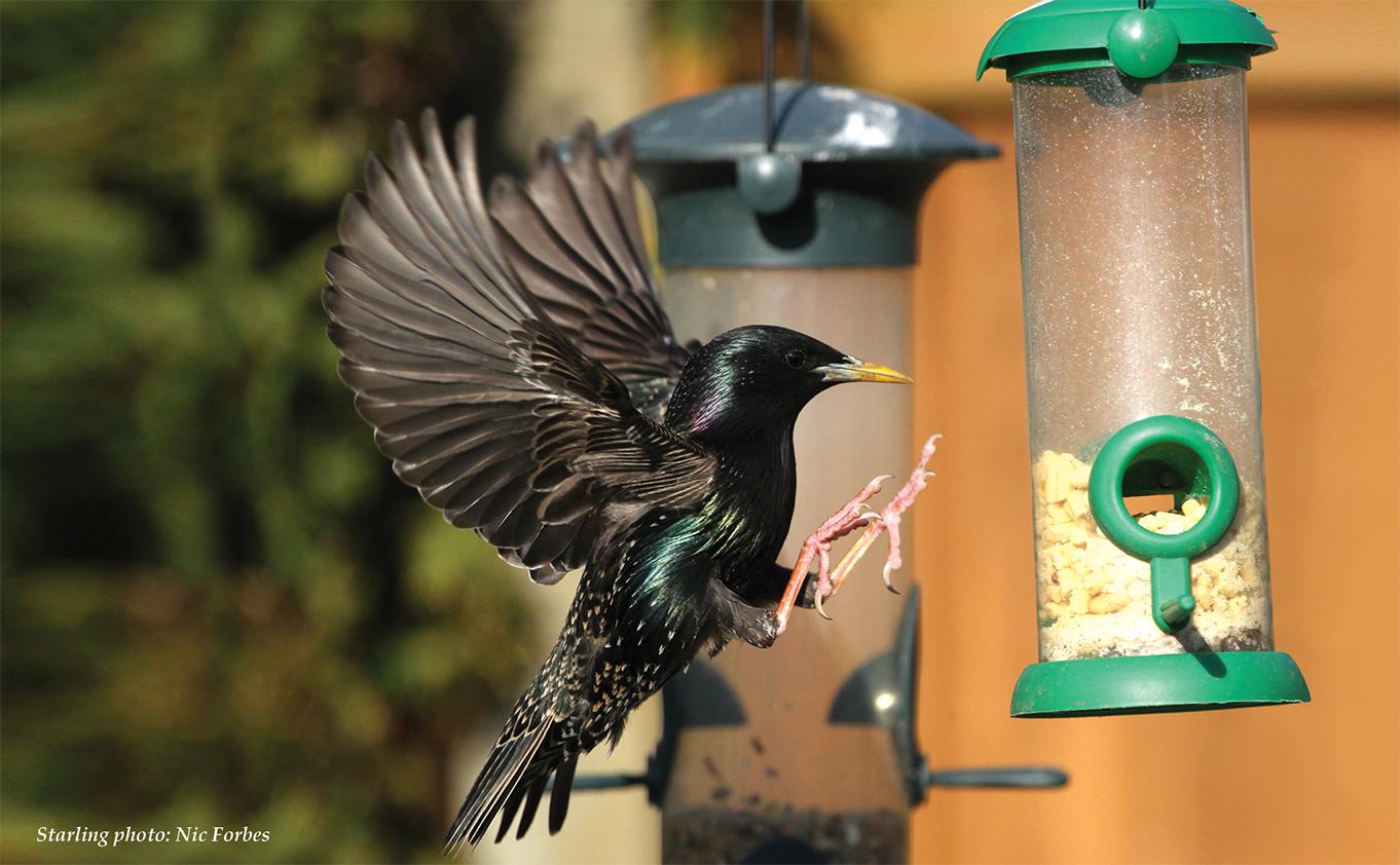 Birdwatch pic 1