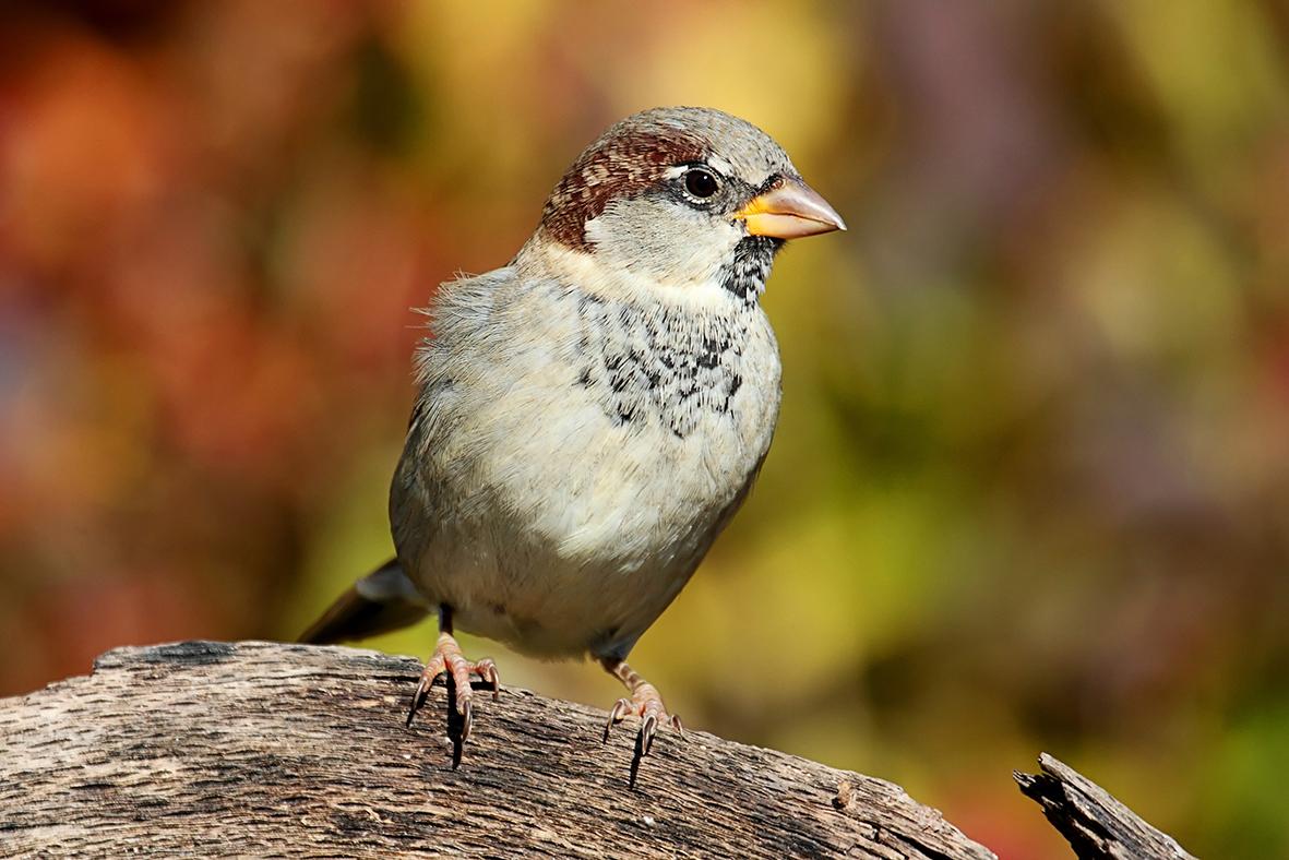bird watch pic