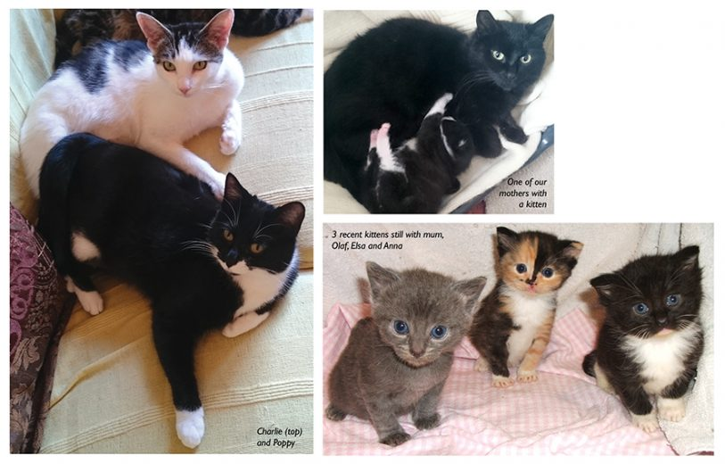 MAY2015CatsProtectionpic